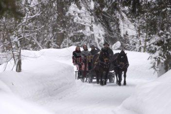 Gut Brandlhof –Pferdekutsche (c) Foto Bauer