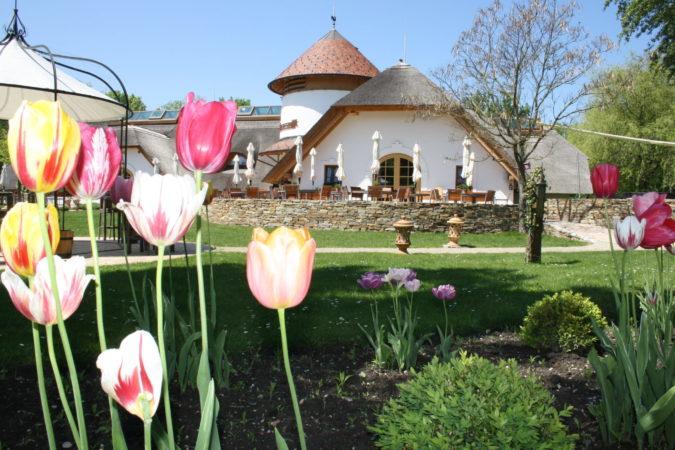 Csarda Frühling